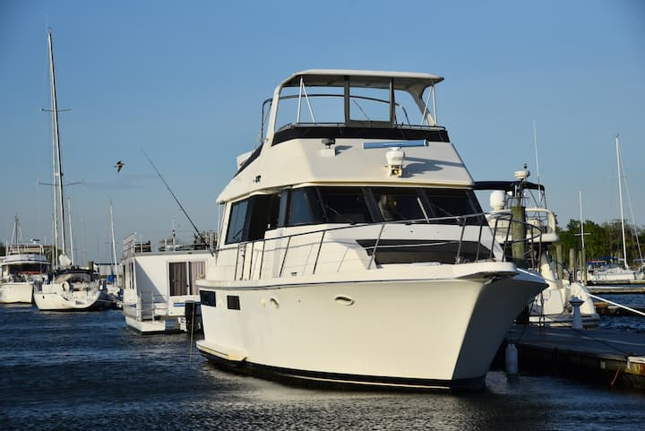 Ocean Yacht's  Hosting