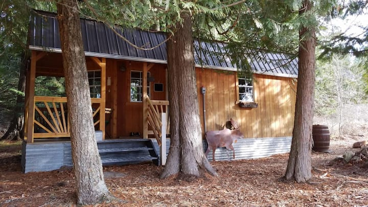Cabin in the Cedars.Close to Lake,Town & Mountain