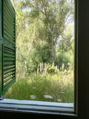 Ventana de la habitación Torelló: da al bosque de detrás de la piscina. Por la mañana podrás escuchar a los pájaros y por la tarde te entrará el sol.