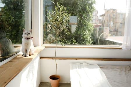 西街开元寺旁/ room3花生。你一定喜欢的阳台花园房。