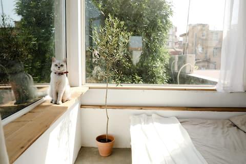 「小南风·花生」你一定喜欢的阳台花园房。
