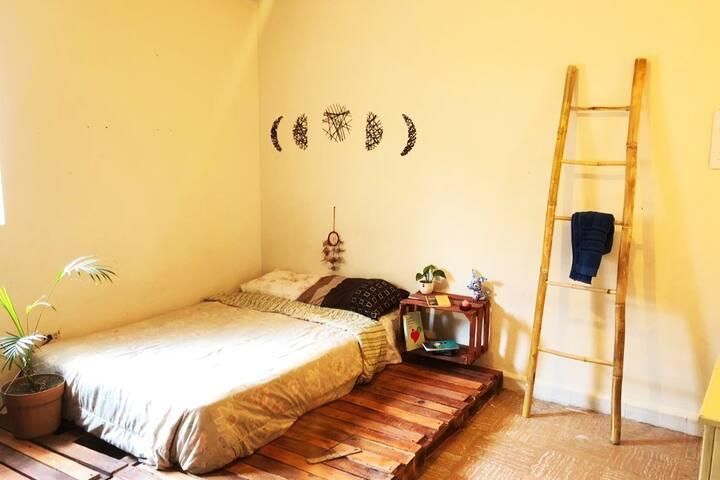 The Bamboo Room Chihuahua