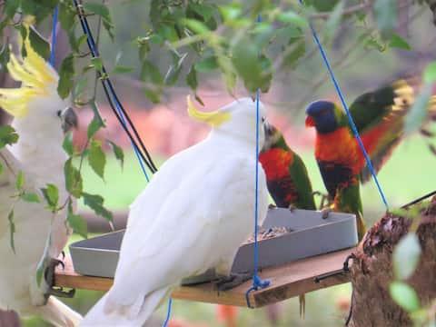 Peppercorn Park Retreat, Yarra Ranges METRO, FSC