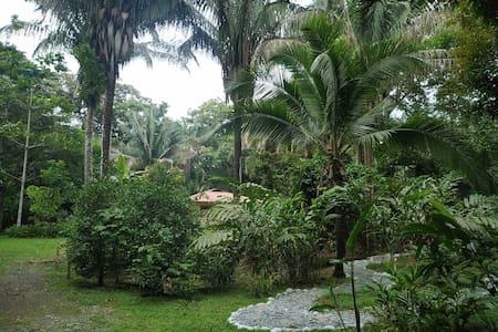 Four Monkeys House -   Cabo Matapalo Surf