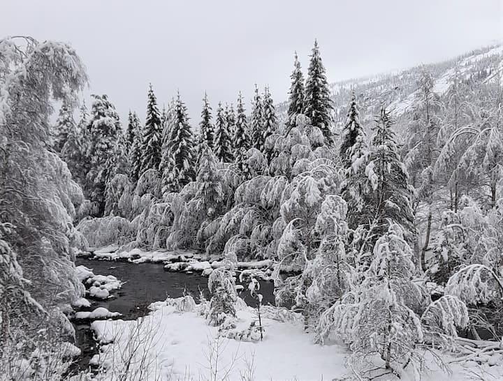 Rom hos forfatter midt i Vest-Telemarks natur!