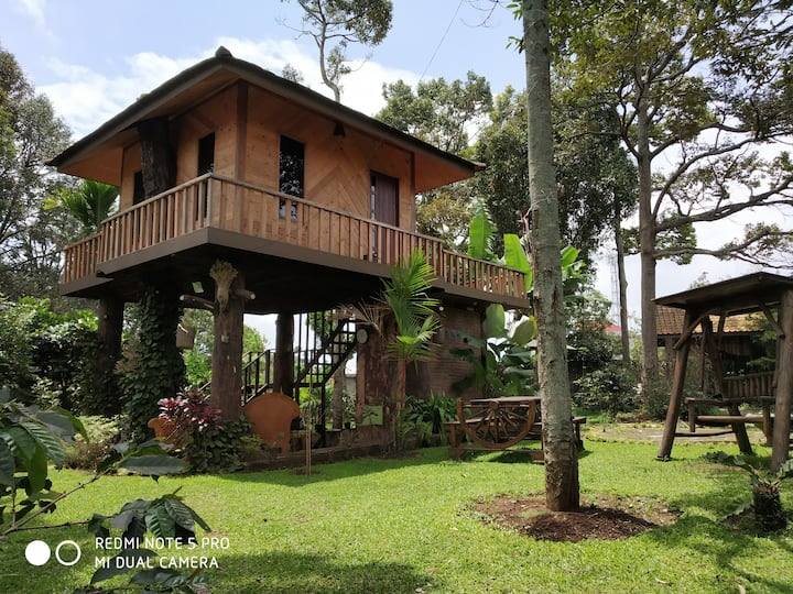 Tree House with Garden View