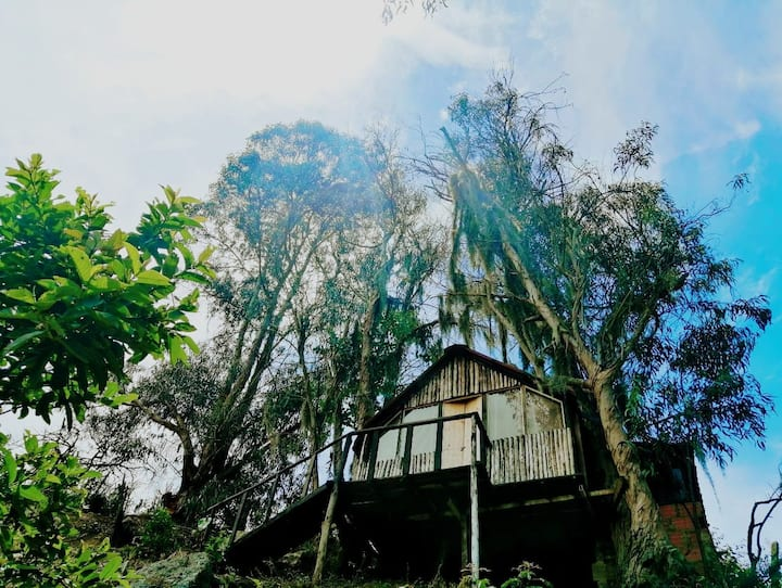 Glamping Malaga (Casa del árbol)