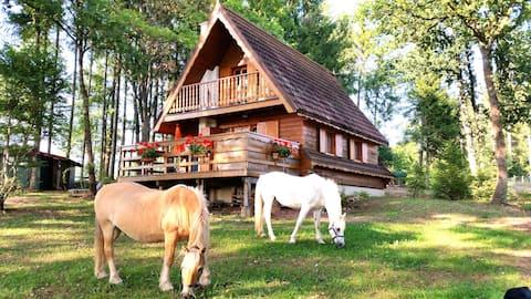 """Eco-gîte Epona """"La Datcha"""" Parc Naturel des Vosges"""