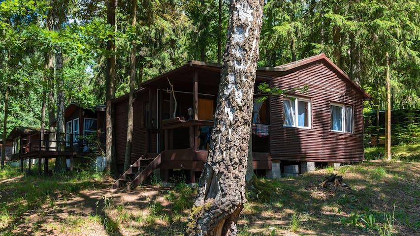 Drewniane domki w lesie nad jeziorem.