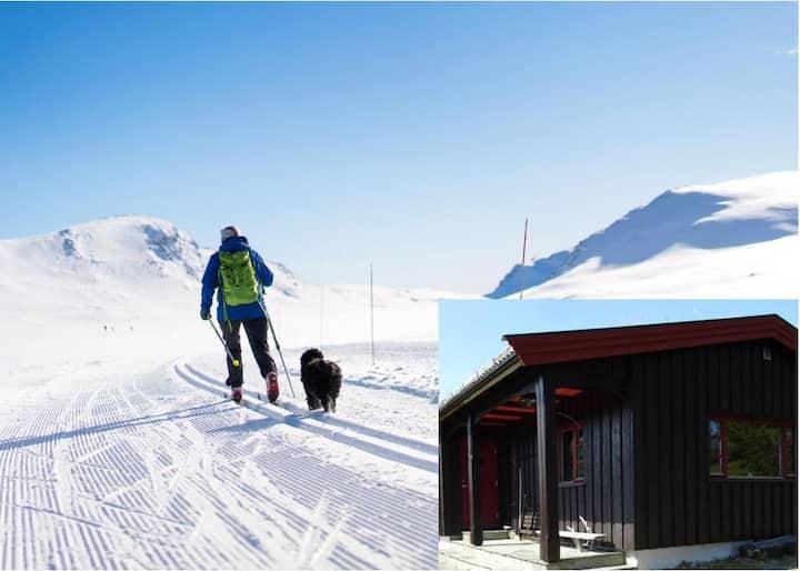 Koselig hytte Rondane Høvringen ca 1.000 moh.