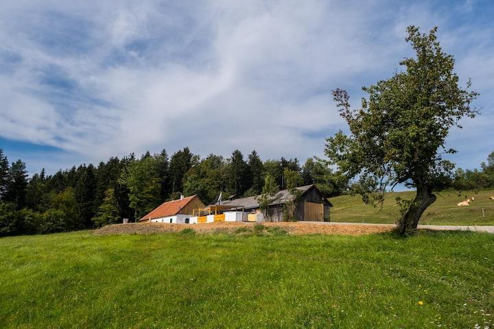 WeideLANDhaus - ALLEINLAGE - Ruhe, Kühe & du!