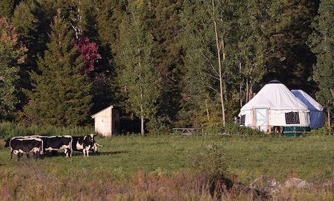 Yurt Experience on a Heritage Farm