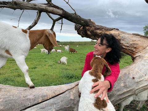 Du Bruyn Farmstay-Entire basement-Goats galore!