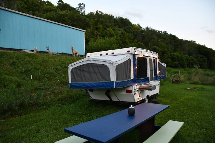 Starcraft Creekside - camp with alpacas (sleeps 4)