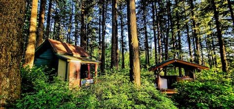 Cabin of Your Dreams!