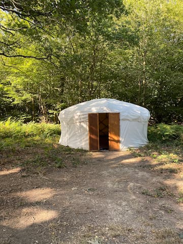 Spacious yurt set in private ancient woodland
