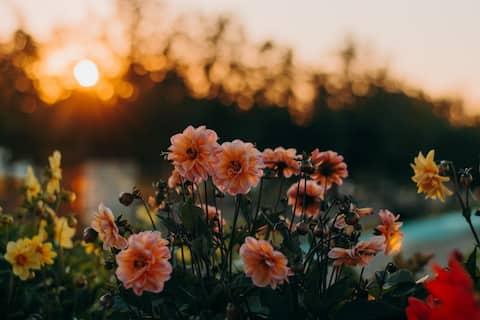 Nature, serenity, peace, and self-appreciation