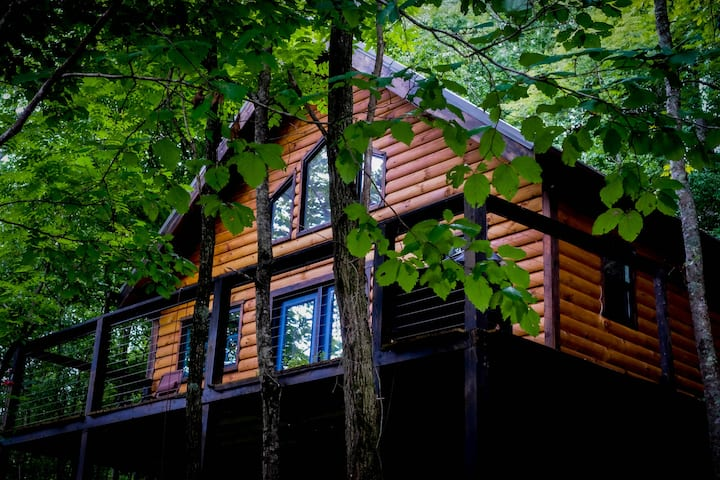 Honey Bear Cabin in the Forest