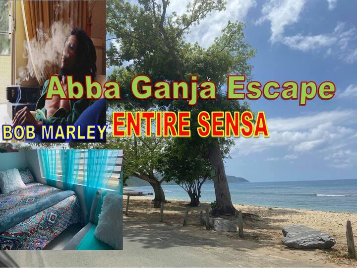 Abba Ganja Escape (EntireSensa)-buses-Home to Self