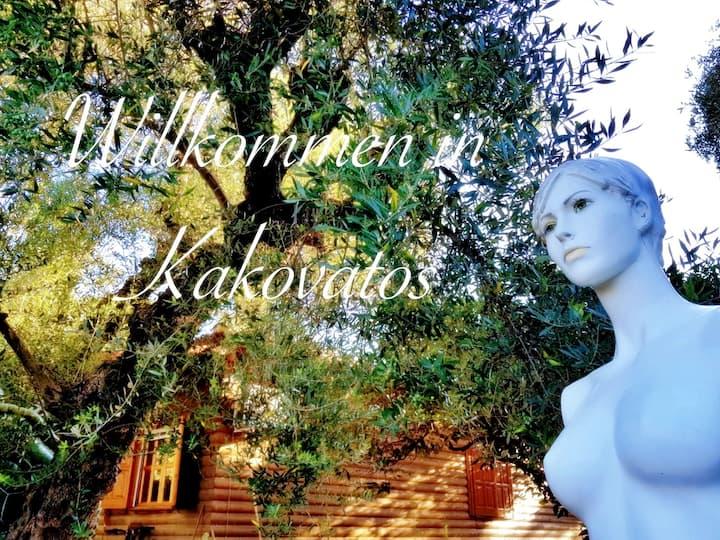 Unter Olivenbäumen, Träumen, Entspannen, Frei sein