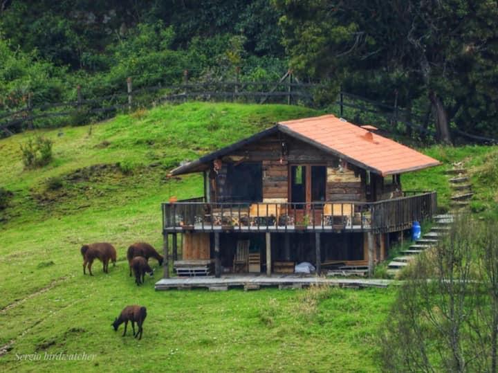 Cabaña La Libélula