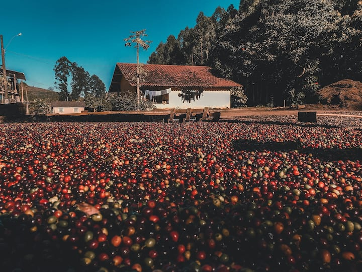 Bonanza Coffee Farm
