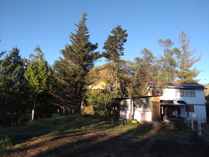 Cozy farm-home, pineforest, animals, great views