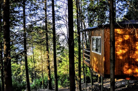 Cantharellus Treehouse Experience Gerês