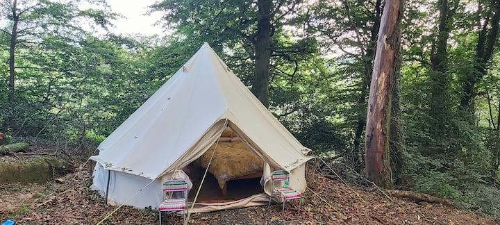Offgrid wildlife woodland near Looe, Bluebell tent