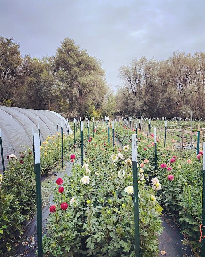 Flower Farm Retreat - near Downtown and Mountains