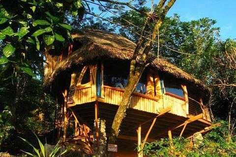 Passez vos Nuits Insolites dans de Lodge en Forêt