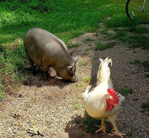 Farmed Animal Sanctuary, stay in camper!