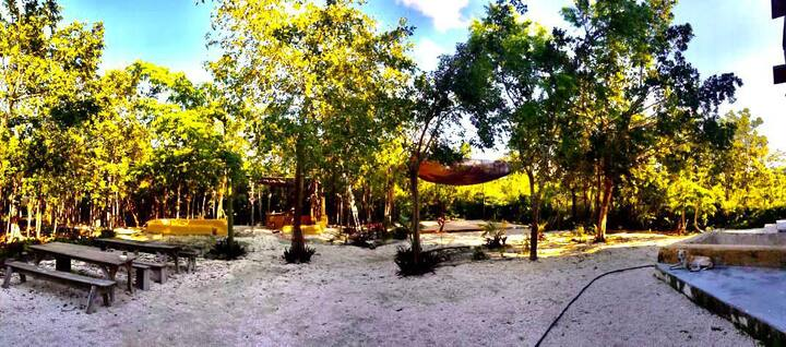 Camp in an Eco Lodge in the jungle ⛺️
