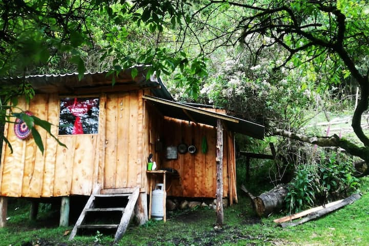 Cabaña rústica frente al río con bosque nativo