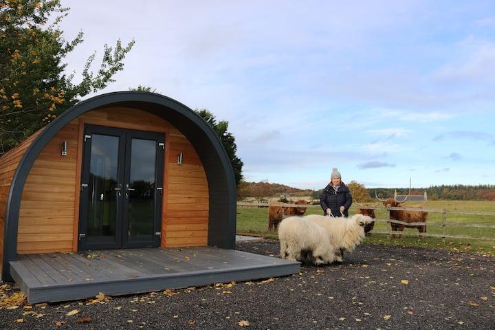 Glampods Glamping Pod -Meet  Highland Cows Elgin