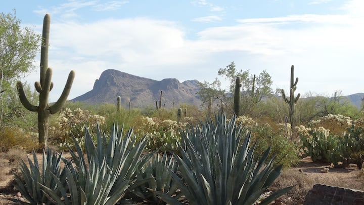 The best view in Tucson