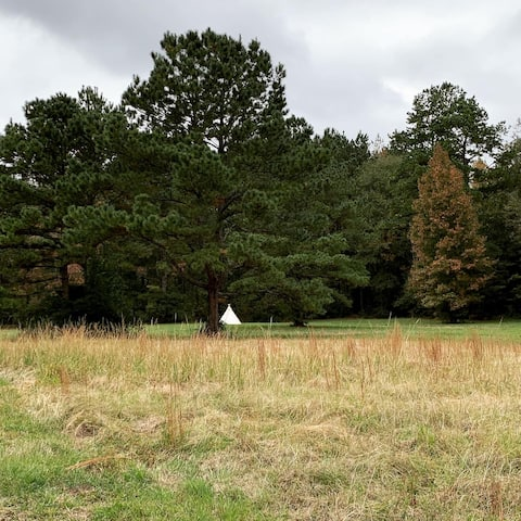 Canvas Tipi in the East Texas Pines