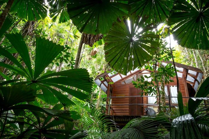 Rainforest Hideaway at Daintree Wilderness Lodge