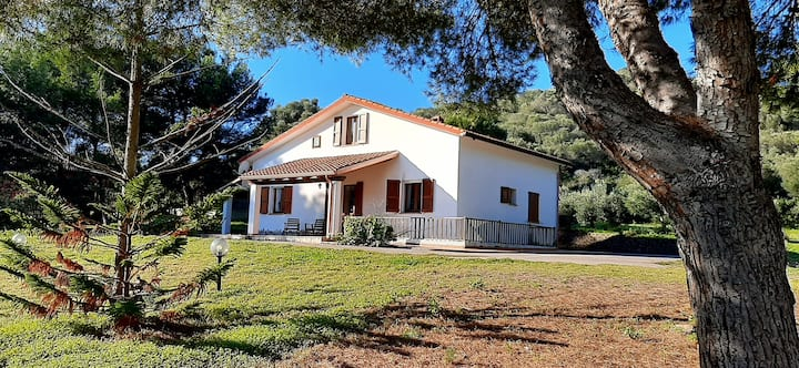 Villa in  center of the olive grove facing the sea