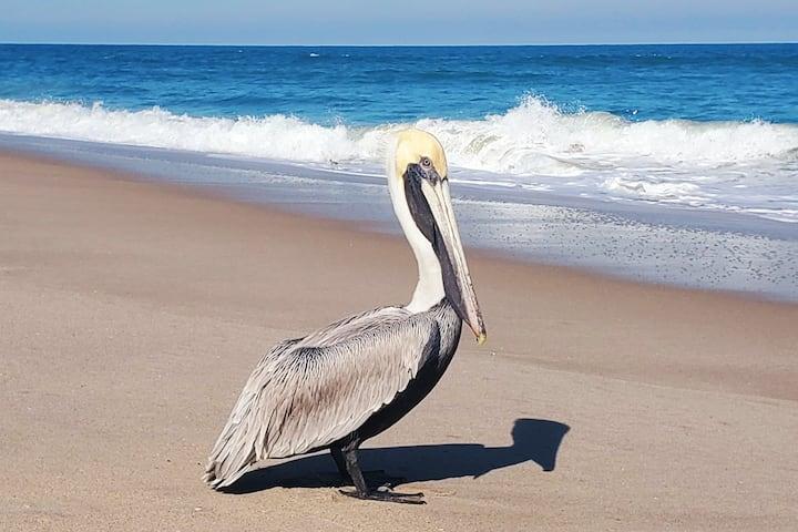 Tranquility Pelican Suite - Oceanfront Paradise!