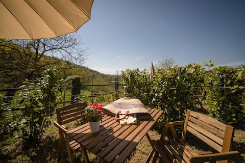 Studio in rustic Tuscan Agriturismo with pool