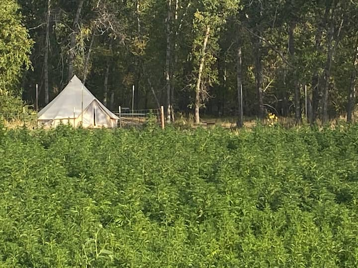 Glamping on a hemp farm in the Sangre de Cristos
