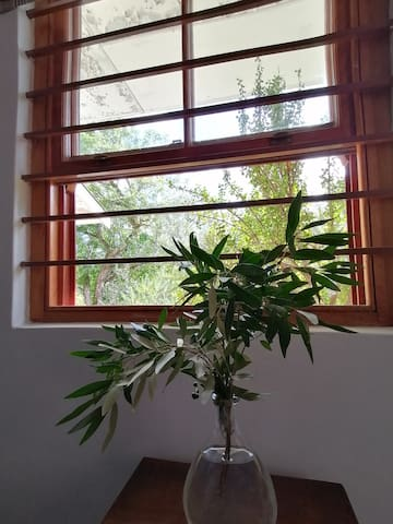 Wild Olive view