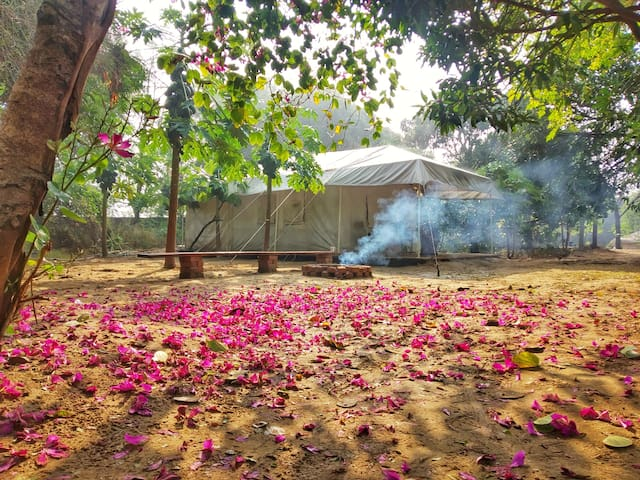 Kachnar Stays- Luxury Tents amidst an Organic Farm