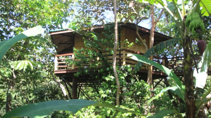 AMAZING, TREEHOUSE IN  PILON DE PAVONES