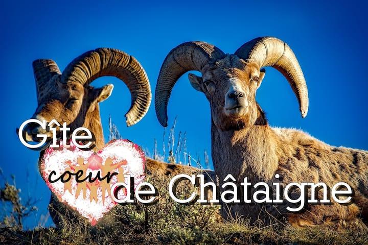 """"""" Coeur de Châtaigne """" à partir de 17€ /nuit"""