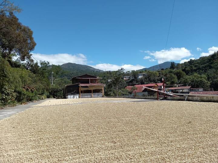 beneficio de cafe la union volcan acatenango