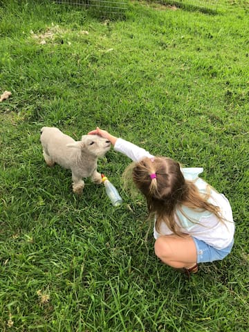 Farmstay close to Sydney - Shalimar's Mini-me farm