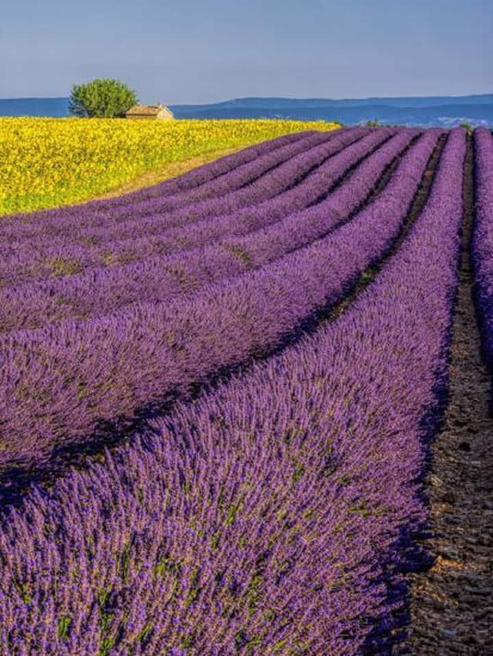 Magical Provencal Hidden Gem-luxury IN Provence