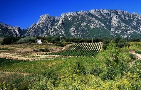 ''La Maison Verte'' Parc Naturel du Haut Languedoc